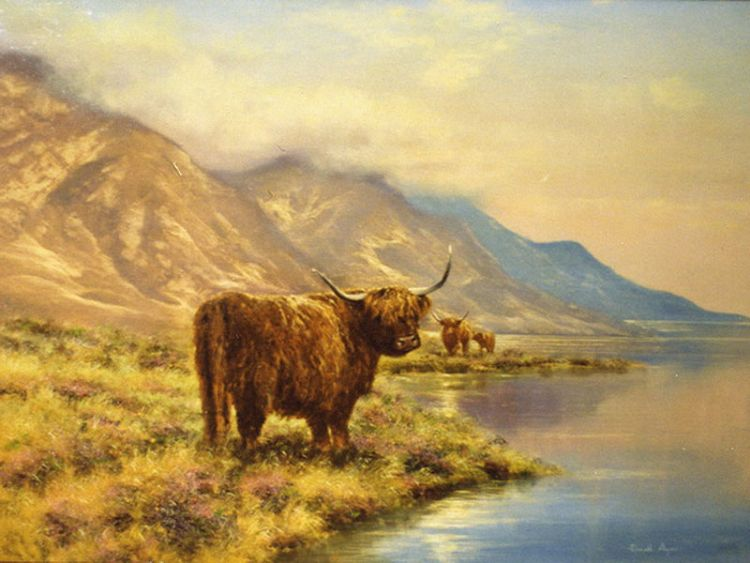 Highland Coo Donald Ayres Landscape And Marine Artist