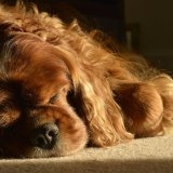 Animal - Dog (Canis lupus familiaris) - Let Sleeping Dogs Lie
