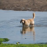 Animal - Dog (Canis lupus familiaris) - Now where is that ball