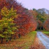 Autumn - Approach to Pitmedden