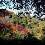 Autumn - Changing Colours