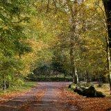 Autumn - In Hazlehead Park