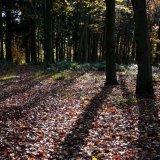 Autumn - Shadows
