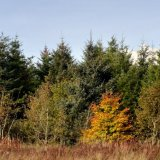 Autumn - Autumn Tree in the Forest