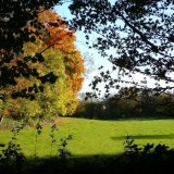 Autumn - Trees and Field