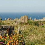 Castle - Dunnottar Castle (with Flowers)