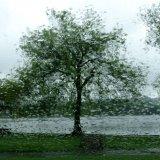 Autumn - Rain at Linlithgow Loch