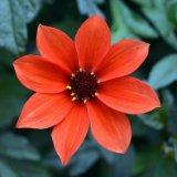 Flower - Red Petal Flower