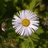 Flower - White Flower