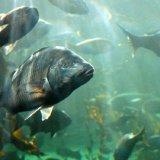 SOUTH AFRICA - Cape Town Aquarium