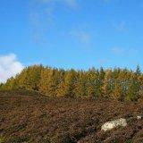Tree - Tree Line