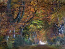 Autumn in Angus