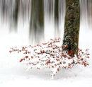 Winter, Beechwood.