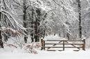Winter, Caddam Wood