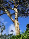 """""""Eucalyptus & Agapanthus"""""""