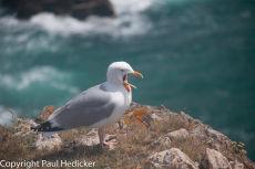 Cornwall 2011-14