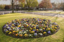 Harpenden flower bed