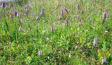 FLW20-Orchids at Brockholes