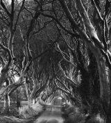 LNS10-Dark Hedges N.Ireland