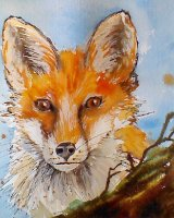 'Kevin' the Fox