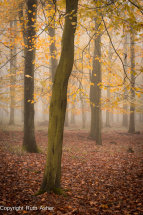 Autumn's last colours