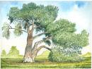 Stone Pine Tree - Kew Gardens, Richmond, Surrey UK