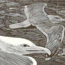 Gulls (wood engraving)