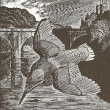Kingfisher (wood engraving 5 x 4 inches)