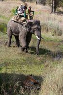 Elephant & Tourists