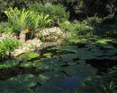 Ischia Gardens Pond