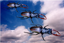 Stagbeetles in Formation