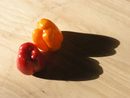 Peppers & Shadow