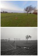 Hackney Marshes 2011 & 1987