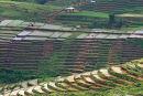 Rice terraces at Ruteng