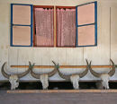 Buffalo sculls