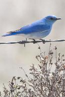 19 Bluebird Mountain web1439