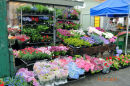 Bergen Flower stall