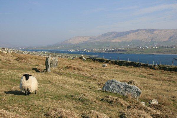 Bray Head, Valentia Island, Co. Kerry