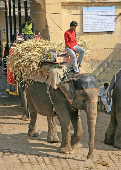 Elephants at the Amber Fort, Jaipur