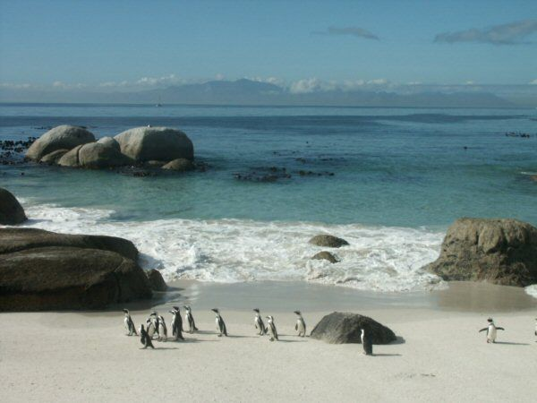 Boulders Beach near Cape Town, South Africa