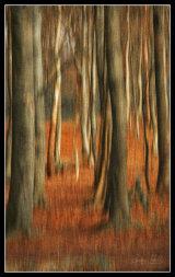 Woodland in Autumn