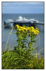 Llandudno pier from Happy Valley