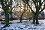 Sun and Snow in Crane Park