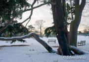Winter at Kew