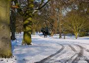Snow at Kew Gardens