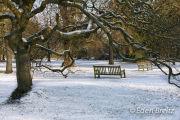 Snowy Kew Gardens