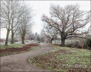Crane Park - Winter