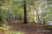 Ockham Common 1