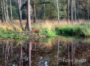 Ockham Common 2