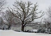 Snowy Crane Park